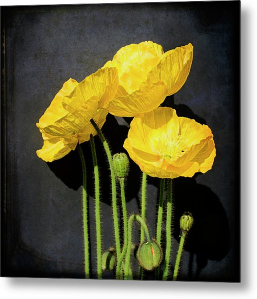 Iceland Yellow Poppies Metal Print by Paul Grand Image