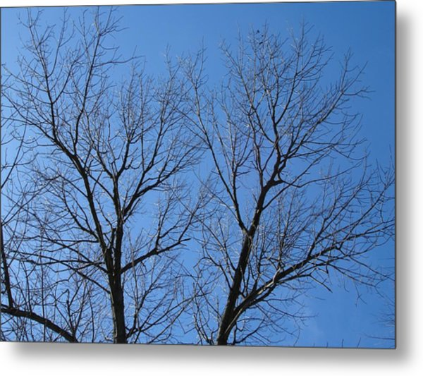 Icy Lace Metal Print by Suzanne Fenster