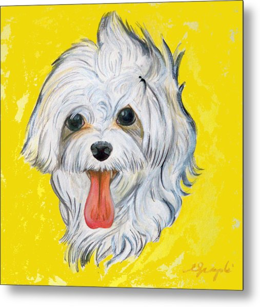 Icy The Maltese Metal Print by Ann Marie Napoli