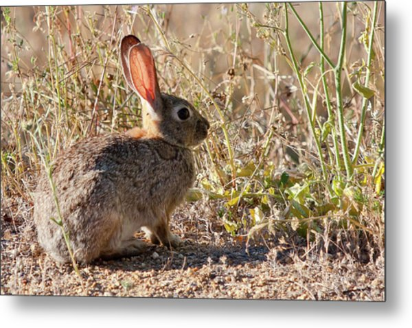 I'm All Ears Metal Print