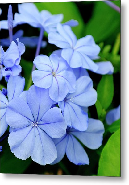 Imperial Blue Metal Print