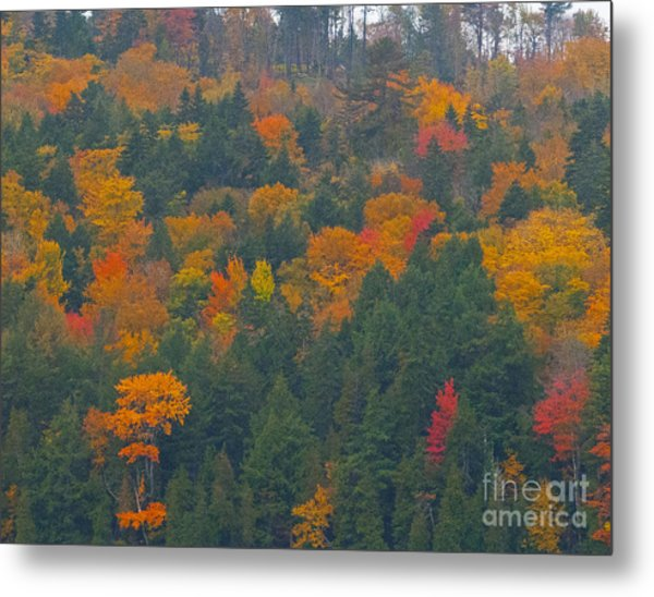 Imprssions Of Autumn Metal Print by Charles  Ridgway