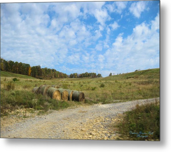 In A Country Field Metal Print by Darlene Bell