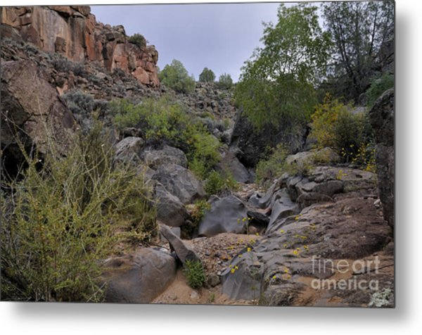 Metal Print featuring the photograph In The Arroyo   by Ron Cline
