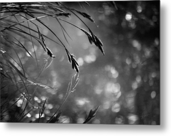 In The Early Morning Hours Metal Print