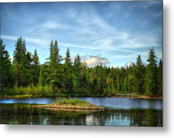 In The Forest Metal Print by Gary Smith