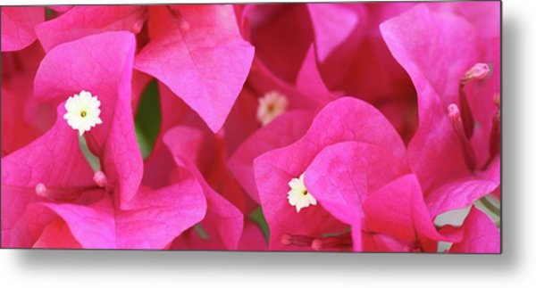 In The Pink Today Metal Print by Andrea  OConnell
