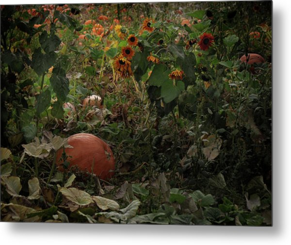 In The Shades Of An Autumn Sky Metal Print