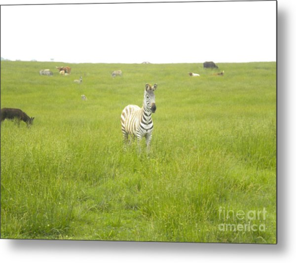 Interested Metal Print by Tessa Priddy
