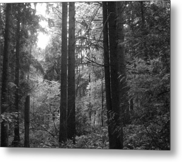 Into The Wood Metal Print