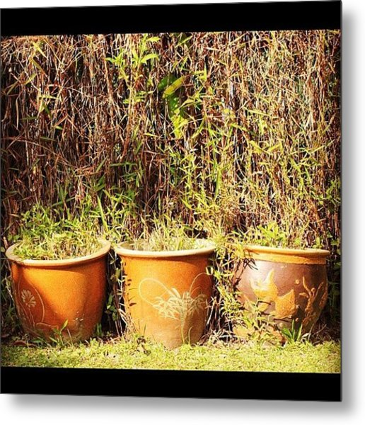 Invasion Of The Green, This Morning In Metal Print