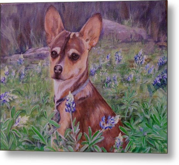 Jacob  In Bluebonnets Metal Print