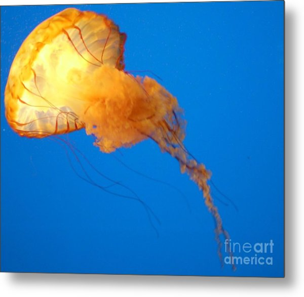 Jelly Belly Metal Print by Elizabeth Hernandez