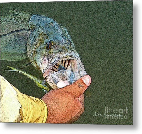 Jerkbait Snook Metal Print