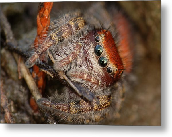 Jumping Spider Portrait Metal Print
