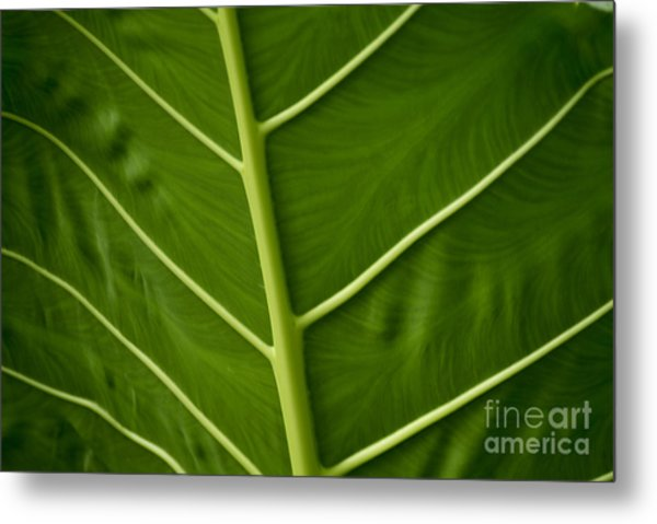 Jungle Leaf Metal Print