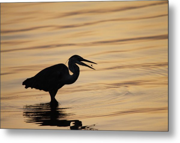 Just A Little Snack For Breakfast Metal Print