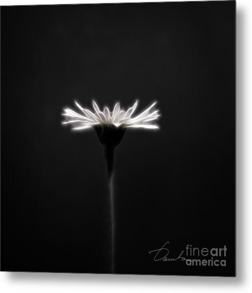 Just Daisy  Metal Print