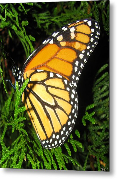 Just Out Of Cacoon Metal Print by Debra     Vatalaro