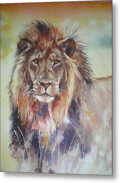 Kenyan Lion Metal Print by Sandra Phryce-Jones