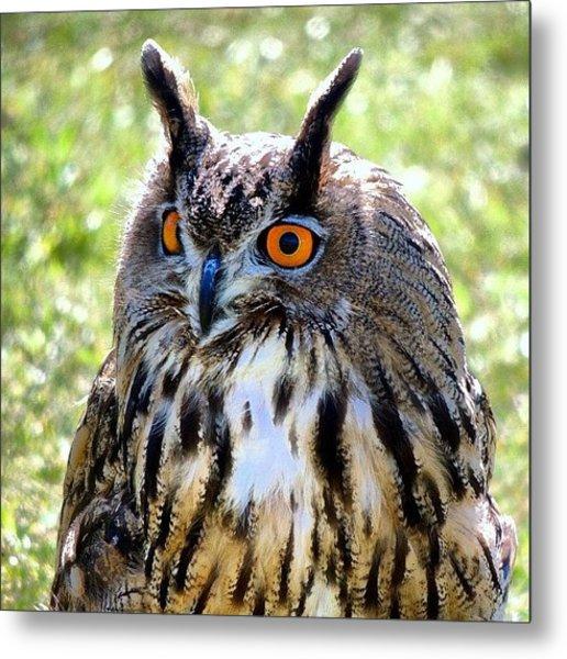King Owl Metal Print