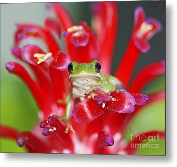 Kiss A Prince Frog Metal Print