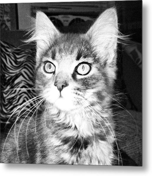 Kitten Metal Print by Angela Garrison