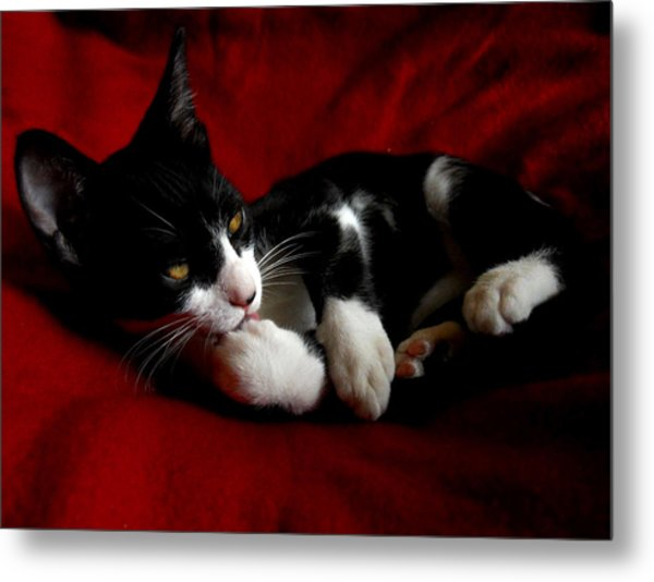 Kitten On Red Take Two Metal Print