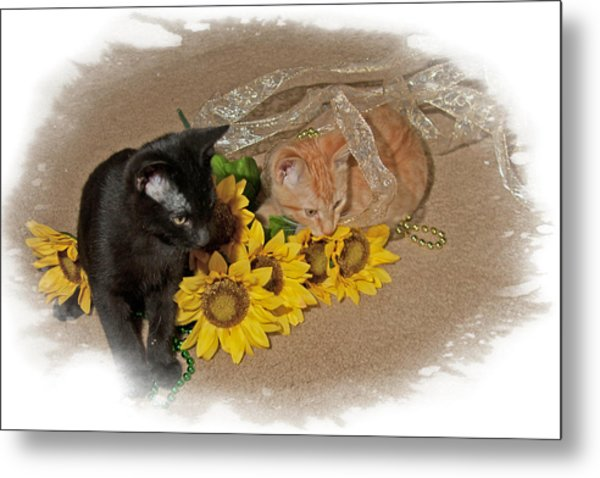 Kittens And Sunflowers Metal Print
