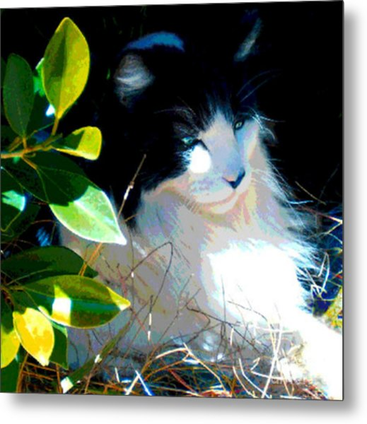 Kitty Hideaway Metal Print