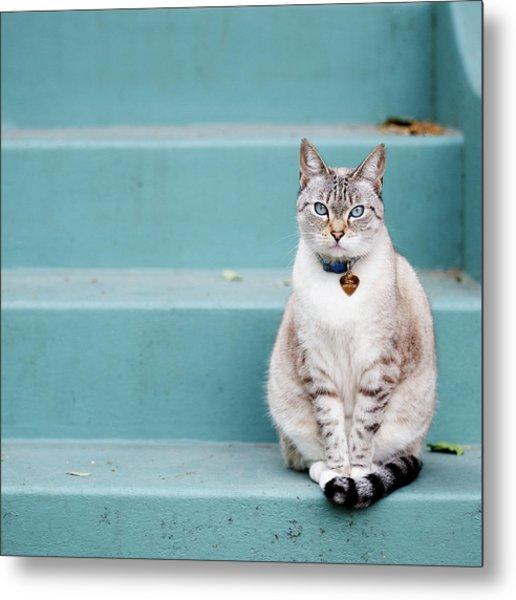 Kitty On Blue Steps Metal Print
