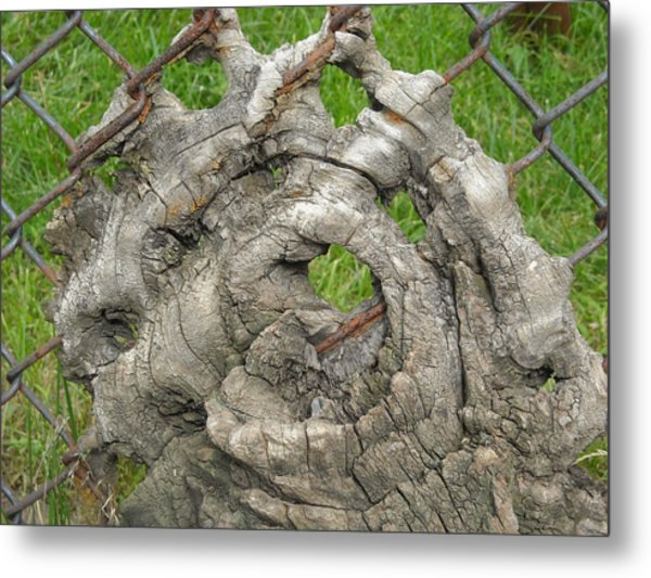 Knot In Fence 1 Metal Print