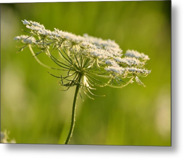 Lacy White Flower Metal Print