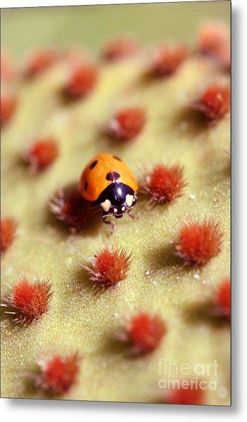 Ladybug2 Metal Print