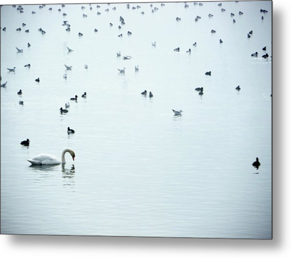 Lake Constance Metal Print by Rolfo