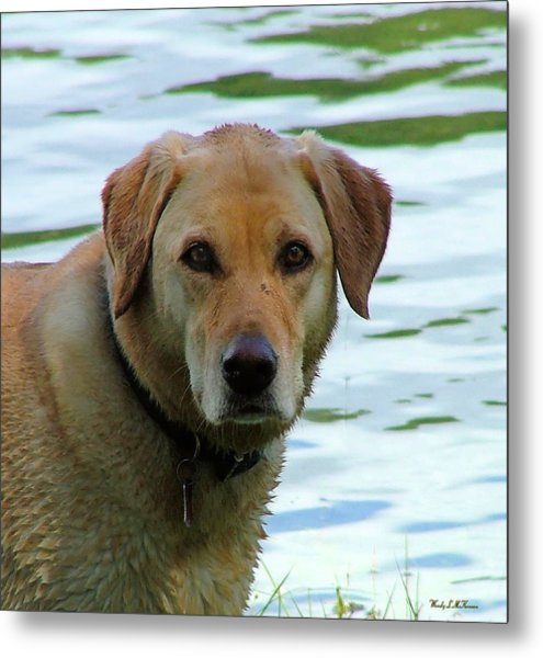 Lake Dog Metal Print