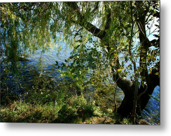 Lakeside Tree Metal Print
