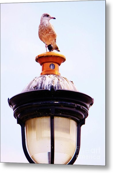 Lampost Gull   One Metal Print by Judy Via-Wolff
