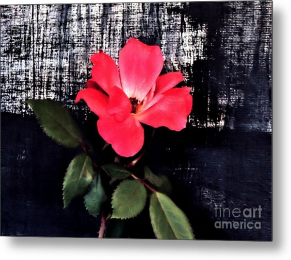 Last Rose Of The Summer Metal Print by Marsha Heiken