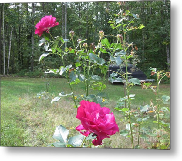Last Roses Of The Summer For Mother  Metal Print