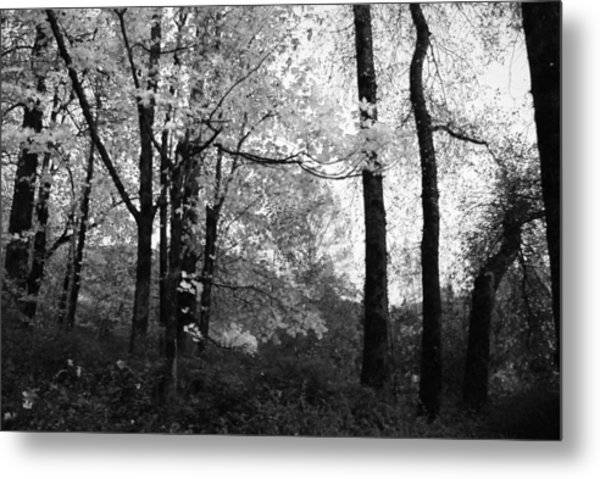 Lasting Leaves Metal Print