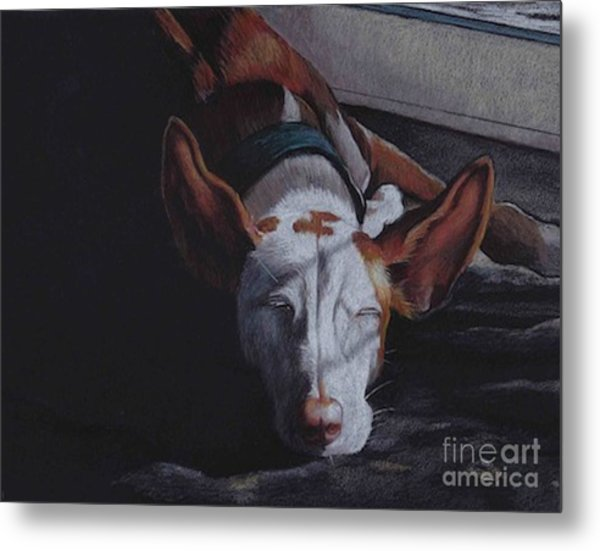 Late Afternoon Nap Metal Print by Charlotte Yealey