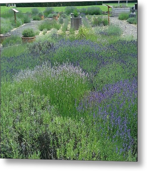 Lavender At The Abbey Metal Print