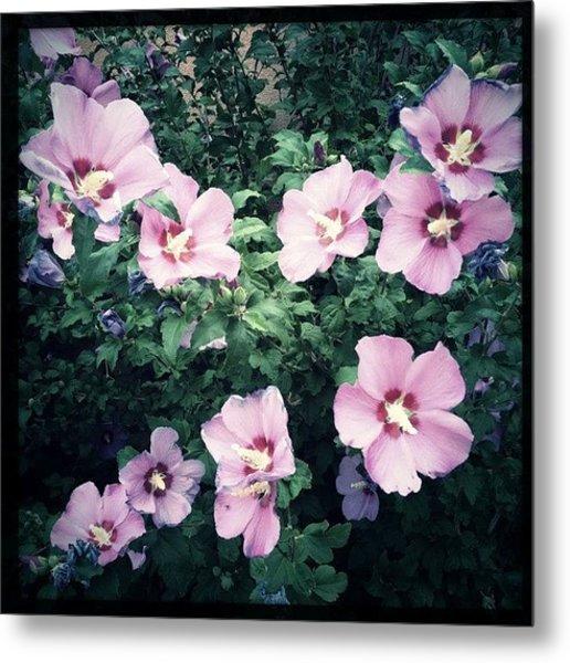 Lavender Hibiscus Flowers #hipstamatic Metal Print