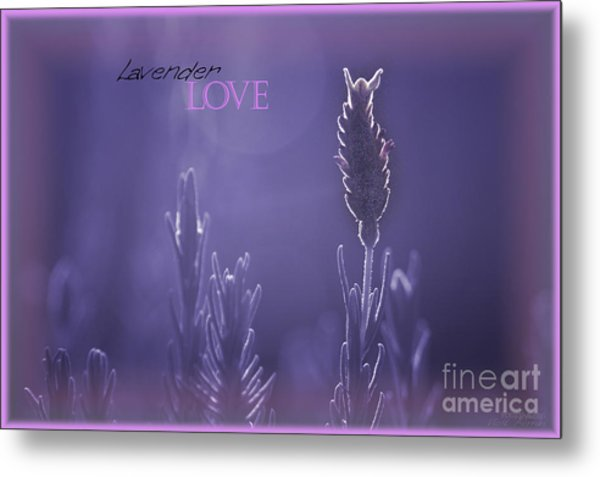 Metal Print featuring the photograph Lavender Love by Vicki Ferrari
