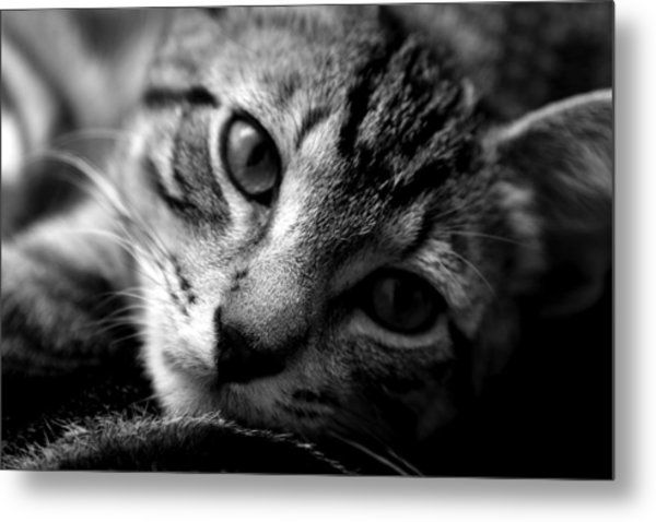 Lazy Days Metal Print