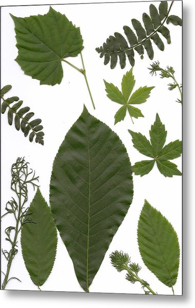 Leaf Collage II Metal Print by Mary Ann Southern