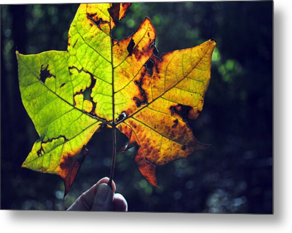 Leaf In Light Metal Print