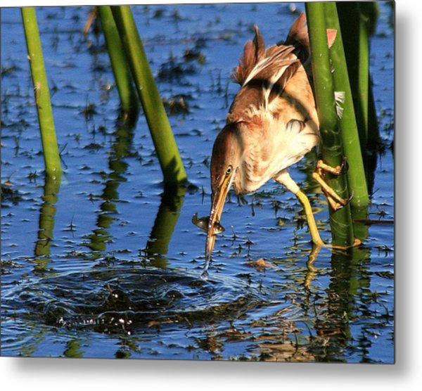 Least Bittern With A Molly Metal Print