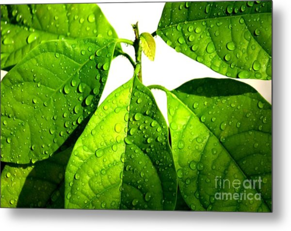Leaves With Raindrops Metal Print by Theresa Willingham
